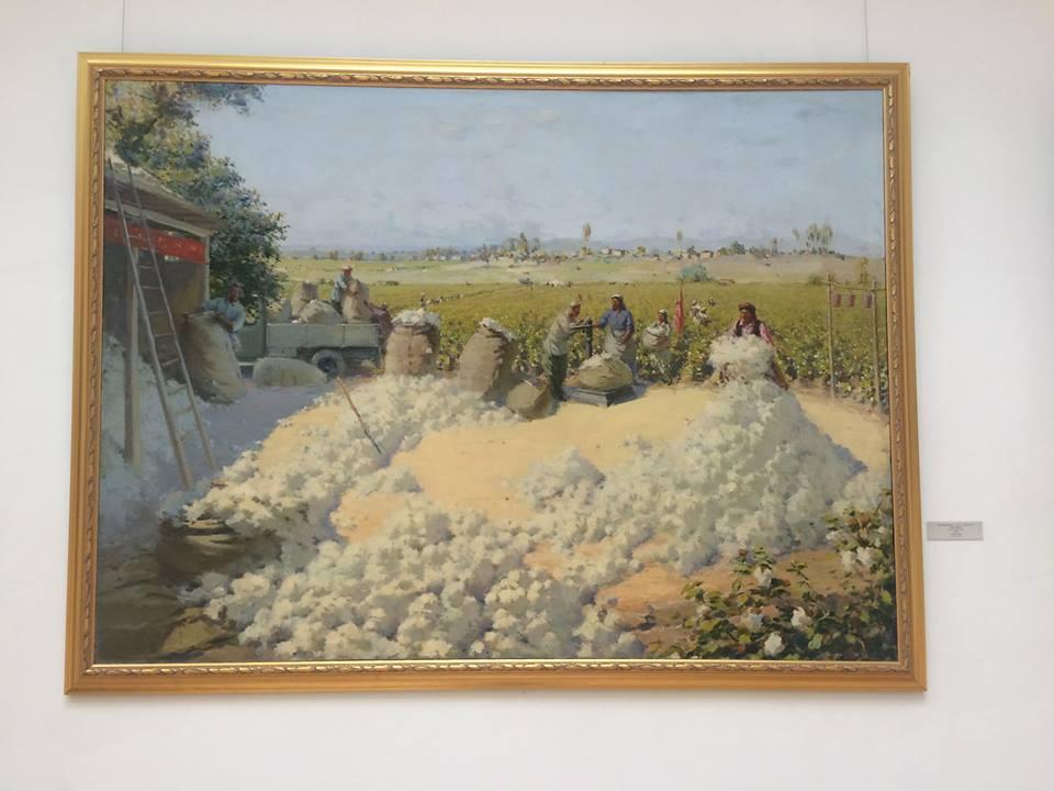 zbiór bawełny